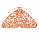 The Moth logo icon