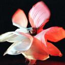 Time Lapse Dance logo
