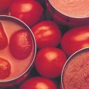Tomato News logo icon