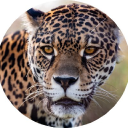 Tompkins Conservation logo icon