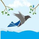 Traffic Crow logo icon