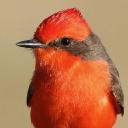 Tucson Audubon logo icon