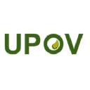 Upov logo icon