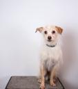 Valley Animal Center logo icon