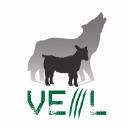 Veil Framework logo icon