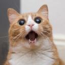viral-kittens.com logo icon