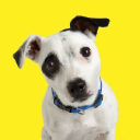 Virginia Green Lawn Care logo icon
