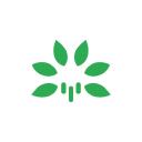Walking Tree logo icon