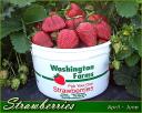 Washington Farms logo icon