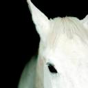 White Horse Machinery Limited logo