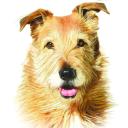 Whole Dog Journal logo icon