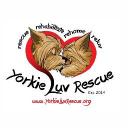 Yorkie Luv Rescue Inc logo